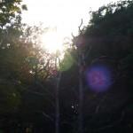 Solen 003 / 2010