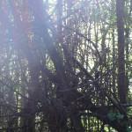Solen 005 / 2010