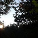 Solen 009 / 2010
